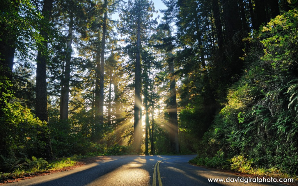 """The Blissful Road to Happiness"", Redwoods National Park, Highway 1, California, USA"