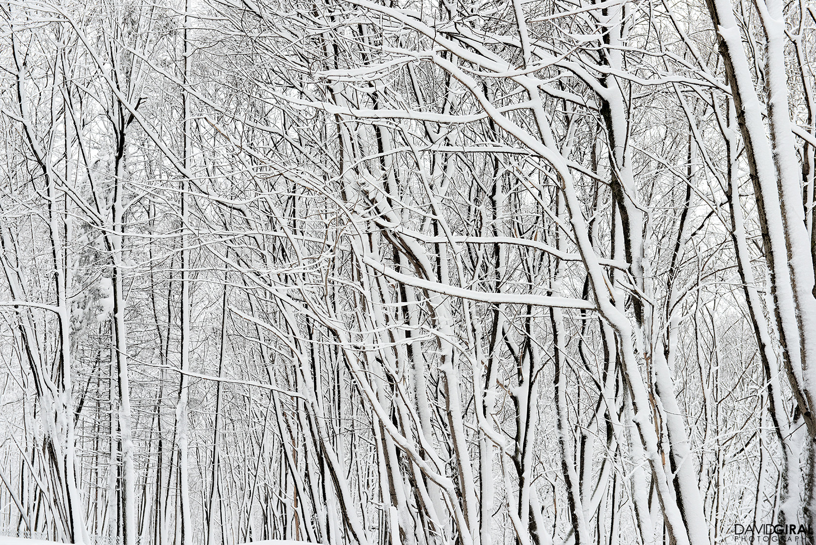 Details of snow covered trees at Mont Royal Park in Montreal