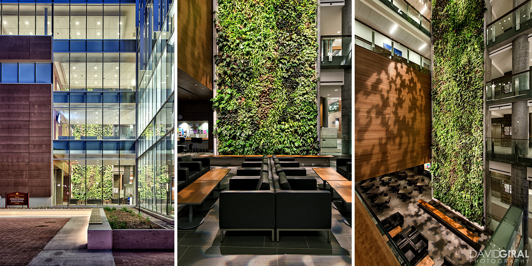 Interiors and biofilter living wall of Faculty of Social Sciences Building at the University of Ottawa by Diamond Shmitt and KWC Architects